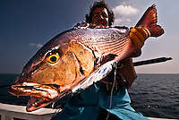 Maldives Islands: November 2008, a fisheman is holding his catch, a Red Snapper (Lutjanus bohar) a brightly colored reef fish endemic of the Indian Ocean. The specimen has been caught on an artificial lure and is quite a large specimen