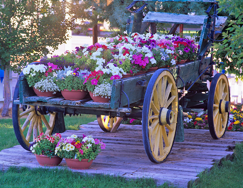 Old wagon with petunias. Bridgeport Inn. Bridgeport, California.