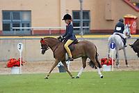 Pony over 11 NE 11.2hh