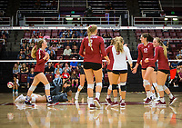 STANFORD, CA - November 2, 2018: Meghan McClure, Kathryn Plummer, Morgan Hentz, Audriana Fitzmorris, Jenna Gray at Maples Pavilion. No. 1 Stanford Cardinal defeated No. 15 Colorado Buffaloes 3-2.