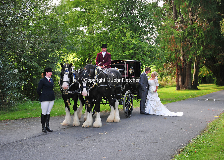 """BNPS.co.uk (01202 558833)<br /> Pic: JohnFletcher/BNPS<br /> <br /> Grandad John uses his Shires for weddings and funerals.<br /> <br /> Little & large - While most children her age are glued to computer screens or playing on mobile phones, horse-mad Maia Fletcher prefers a more ancient form of entertainment.<br /> <br /> The eight-year-old spends any time she can after school and on weekends helping her grandfather John Fletcher with his five giant Shire horses.<br /> <br /> The pint-sized groomsman is not intimidated by the daunting size of the 18 hands high, one tonne beasts and first rode one when she just three years old.<br /> <br /> Despite having her own """"normal"""" sized pony at home, Maia is far more interested in the mammoth Shires.<br /> <br /> The horse-loving youngster, who is just 4ft 6in tall, has been helping her grandfather out ever since - although she has to stand on a step-ladder to help wash and groom them and needs a leg up if she wants to go for a ride."""