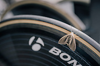 a giant 'sigal' moth found himself a comfy spot on some warm race rubber<br /> <br /> 104th Tour de France 2017<br /> Stage 20 (ITT) - Marseille &rsaquo; Marseille (23km)