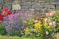 Germany, Rhineland-Palatinate, Ahr-Valley, Mayschoss: summer flowers and dry stone wall | Deutschland, Rheinland-Pfalz, Ahrtal, Mayschoss: bunte Sommerblumen vor Trockenmauer