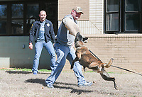 NWA Democrat-Gazette/CHARLIE KAIJO Arem, a five-year-old Belgian Malinois bites Rogers MPO Rick Yager (center) during a demonstration as MPO Travis Pennington (left) watches, Monday, March 5, 2018 at Elmwood Middle School in Rogers.<br /><br />The Rogers Police department took K-9s to Elmwood's REACH class (Reaching Exceptional, Academic and Creative Heights). The students are participating in a forensics unit where they receive hands on career experience.