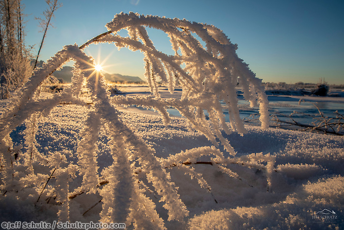 Winter landscape of Hoarfrost on a bush along the shore/bank of the Matanuska River on a sunny day in the Matanuska Valley near Palmer, Alaska. Chugach Mountains  Southcentral Alaska<br /> <br /> Photo by Jeff Schultz/SchultzPhoto.com  (C) 2019  ALL RIGHTS RESERVED