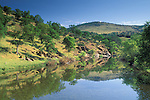 Oak trees, blue sky, and green hills in spring reflected in water, Bear Creek, Mariposa, Sierra Foothills, California