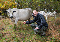 BNPS.co.uk (01202 558833)<br /> Pic: PhilYeomans/BNPS<br />  <br /> A Blenheim Estate Herdsman, Richard Tustian  with the white cattle<br /> <br /> A herd of British white cattle is being returned to help manage ancient woodland on the Blenheim Estate.<br /> <br /> Some 45 cattle, including 21 cows, 23 calves and Sebastian the bull, have been released into High Park, a wooded area of the Oxfordshire estate that was originally created by King Henry I as a deer park in the 12th century. <br /> <br /> It is the first time the woods have been grazed by livestock for more than a century and it is hoped their re-introduction will encourage new tree growth.