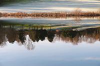 Reflection in Saltash