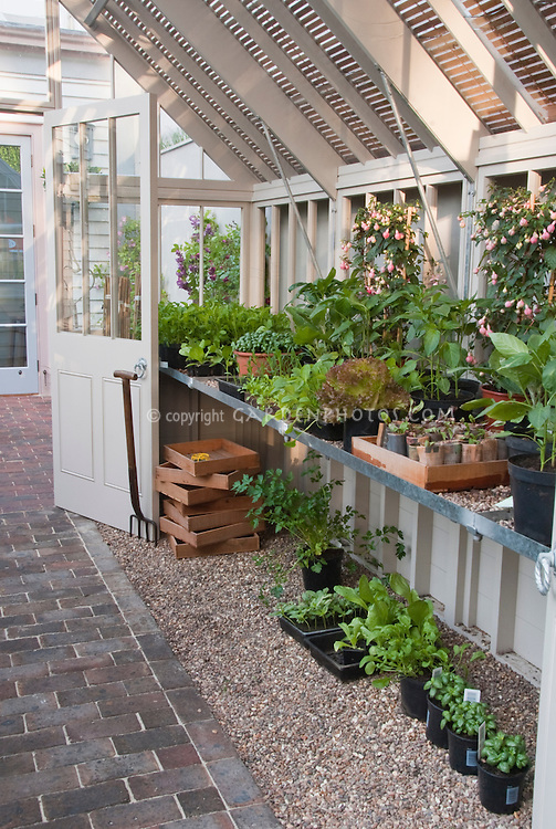 Greenhouse with plants, bench, seedlings of vegetables, Basil herbs, flowers