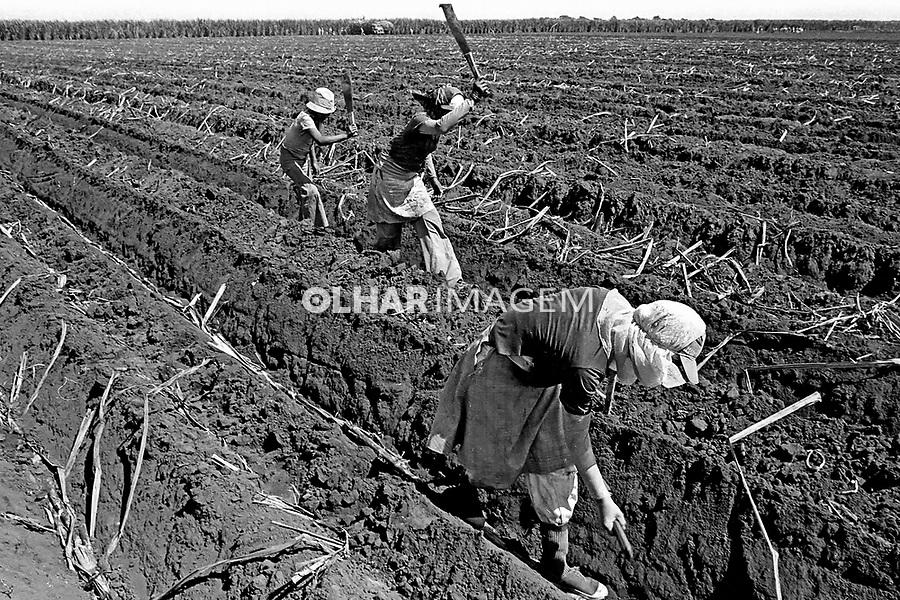 Crianças trabalhadores boias-frias em Sertãozinho, São Paulo. 1980. Foto de Juca Martins.