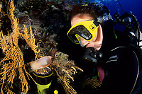 scuba diver looking a cat shark egg case, Vis island, Croatia, Adriatic Sea, Mediterranean, Atlantic