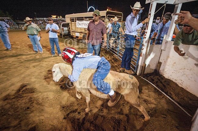 74th Amador County Fair, Plymouth, Calif...Mutton Bustin' finals, Rodeo