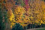 Jesienne drzewa w Polanczyku