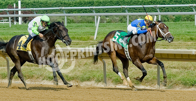 The Absolute One winning The Par Four Stakes at Delaware Park on 7/12/12