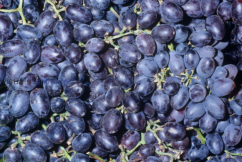 Grapes (Vitis) black seedless variety