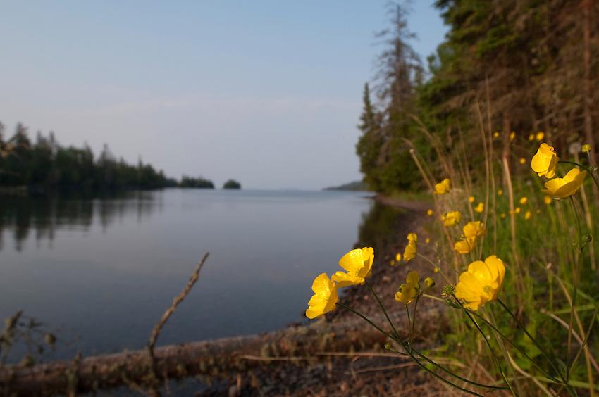 Wildflowers along Duncan Bay on Lake Superior at Isle Royale National Park.