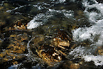 Sea water swirling amongst rocks, showing blurred movement. El Hierro, Canary Islands.