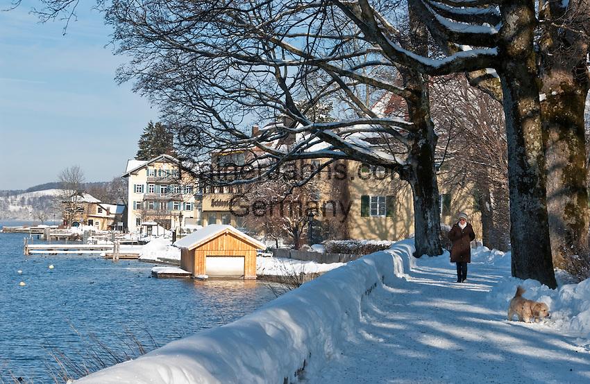 Germany, Bavaria, Upper Bavaria, Tegernseer Valley, Winter at Lake Tegern: winter walk with dog at lakefront walk