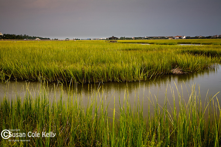 Pawleys Island saltmarsh, Carolina coast, SC, USA