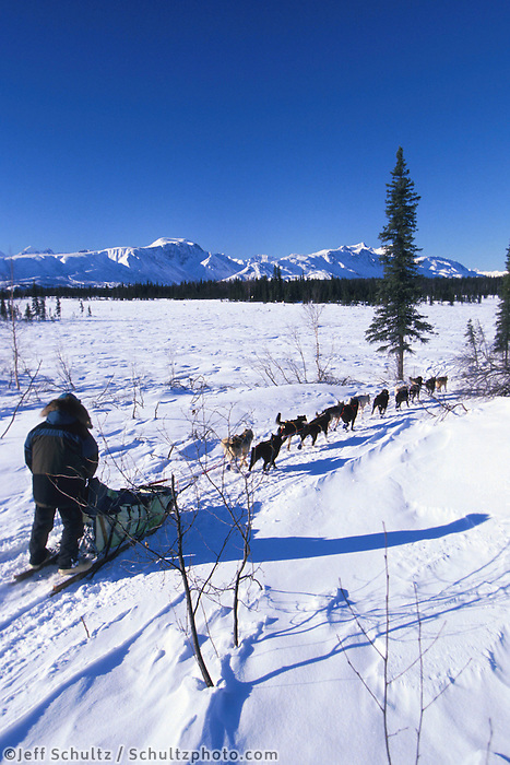C.Thomas mushing Mtns near Finger Lake 1996 Iditarod