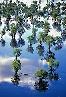 AERIAL OF FLOODPLAINS, NORTHERN AUSTRALIA