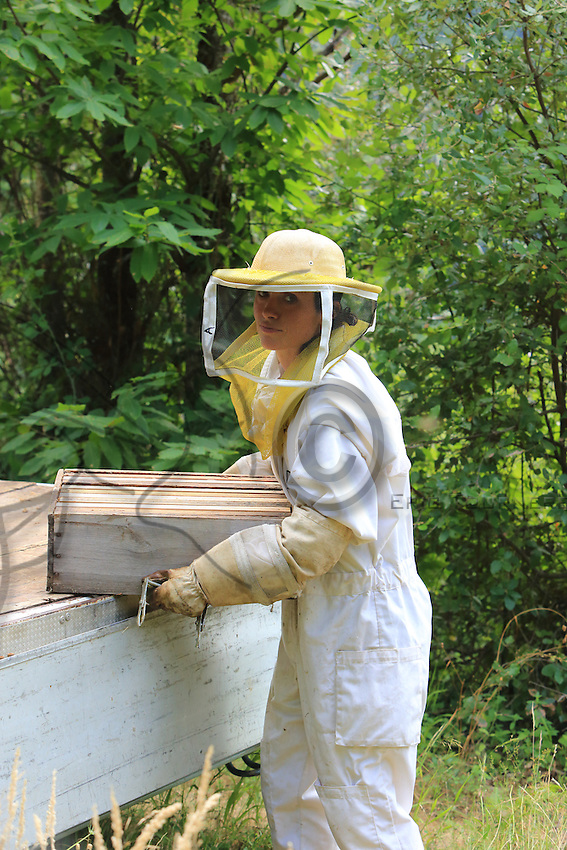 Annette Glokek, in Beaumont in Ardeche, is a professional beekeeper since 5 years ago and owns 300 hives. Annette is not mechanized but she works in collaboration with other beekeepers in exchange for work during the migrations that require exhausting physical effort. ///Annette Glokek, à Beaumont en Ardèche, est professionnelle depuis 5 ans et possède 300 ruches. Annette n'est pas mécanisé mais elle travaille en collaboration avec d'autres apiculteurs en échange de travail pour les transhumances qui nécessite un travail physique éreintant.