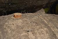 Bung hole with stopper. Oak barrel aging and fermentation cellar. The Moscatel de Setubal cellar. JM Jose Maria da Fonseca, Azeitao, Setubal, Portugal