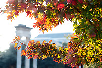 The leaves of a campus maple tree show their fall colors during a recent sunny day in Starkville. MSU students are winding down the 2018 fall semester, with the final day of classes set for Wednesday [Dec. 5]. <br />  (photo by Megan Bean / &copy; Mississippi State University)