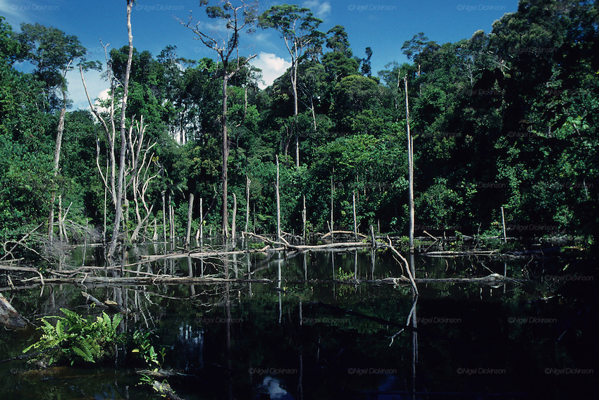 the uses of tropical rainforests in south east asia Asian/indomalayan realm the asian region makes up about one-quarter of earth's land area, but holds almost 60 percent of the world's population changes and disturbance in tropical rainforest in south-east asia shadows in the forest.