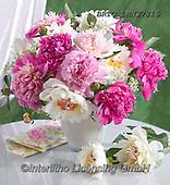 Alfredo, FLOWERS, BLUMEN, FLORES, photos+++++,BRTOLMN37816,#f#, EVERYDAY