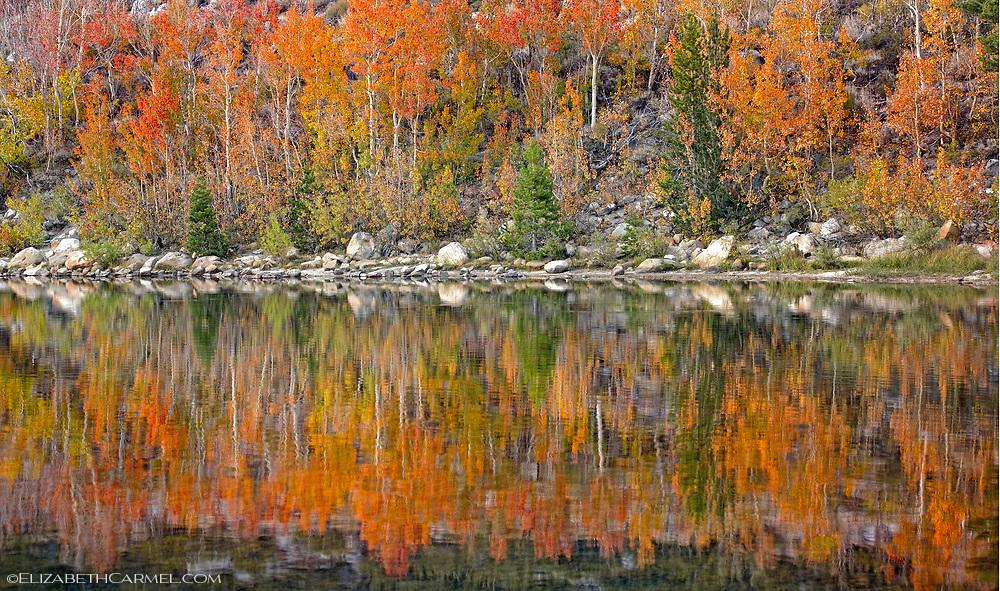 Aspen Reflections