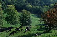 Europe/France/Rhône-Alpes/42/Loire/Massif du Forez/Env de Roche : Pâturages