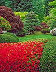 Portland, OR<br /> Mounds of flowering azaleas with shrubs and maple trees in the Japanese Garden, Washington Park