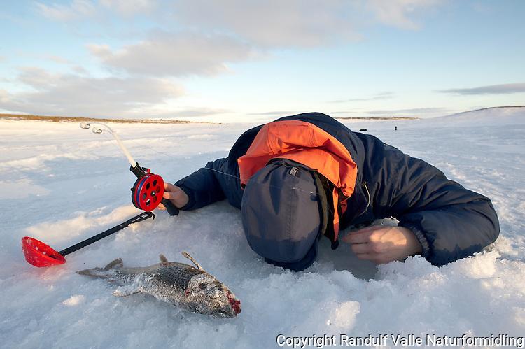 Dame fisker på isen på Ifjordfjellet/Laksefjordvidda. ---- Woman ice fishing.
