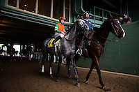 ARCADIA, CA - FEBRUARY 06: Unique Bella #4, ridden by Mike Smith walks to the track for the Las Vigenes Stakes at Santa Anita Park on February 6, 2017 in Arcadia, California. (Photo by: Alex Evers/Eclipse Sportswire/Getty Images)
