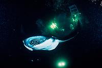 reef manta ray, Manta alfredi, feeding on plankton attracted by the lights of a dive boat, the Kona Agressor II, Kona, Big Island, Hawaii, Pacific Ocean