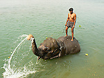 After a day's work at Chitwan National Park, the elephants enjoy a cleansing dip in the river.