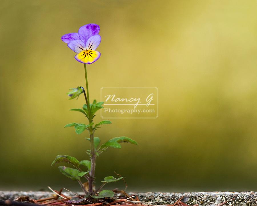 Perseverance of a flower growing in a sidewalk crack