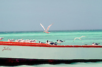 Image is of seagulls landing on wooden boat on beach in Aruba. Approximate date is 1991 and scanned from Kodachrome 64.  (Photo by Tom Theobald)