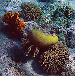 A snorkeling trip at the world famous Paradise Reef as well as Dzul Ha reef off the coast of Cozumel, Mexico. Cozumel is a world-class destination for SCUBA diving and snorkeling because of its crystal clear water, the multitudes of easily accessible coral reefs and the abundance of marine life.  <br />