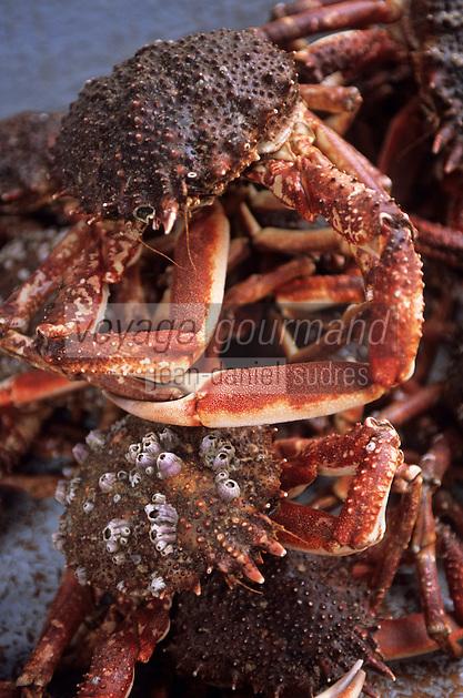 Europe/France/Bretagne/22/Côtes d'Armor/Paimpol: Araignées de mer sur le marché