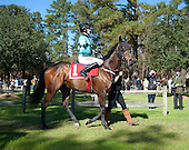 Colonial Cup Races - 11/21/2015