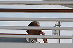 15.08.2014., Pula, Croatia - Saudi prince Khaled bin Sultan smokes a cigarette prior to his departure from a luxury yacht Golden Odyssey. The prince and his wife, daughter and the pilot of the private plane left in the unknown direction in the three hired mercedes cars. <br /> <br /> Foto &copy;  nph / PIXSELL / Dusko Marusic