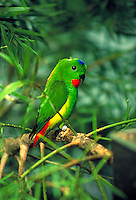 Among a large array of birds in the National Aviary's natural habitats are several species of parrots.