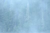Morning fog on Lac-Lajoie. This is a provincial parc, not a true federal park.<br />Parc national du Mont-Tremblant<br />Quebec<br />Canada