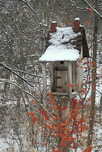 Handmade birdhouse accented by bittersweet berries in, Celiastrus scandes, snowy garden, midwest USA