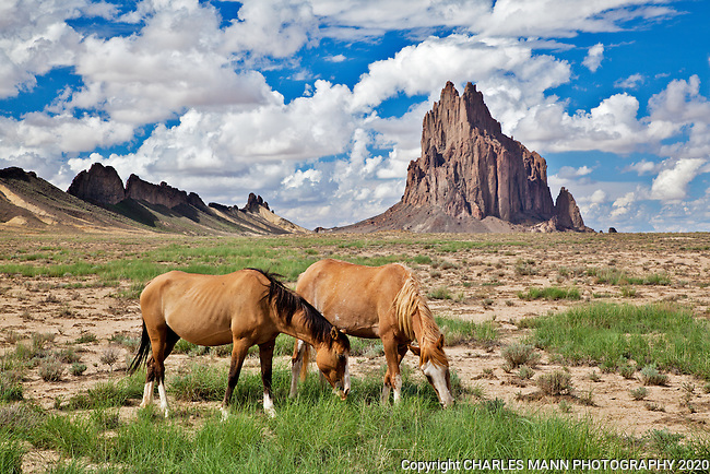 Towering seventeen hundred feet about the plain, Shiprock is the remnant of a volcanic core of basalt located just a few miles south of Shiprock, New Mexico. Horses graze on late summer grasses in front of Shiporock.