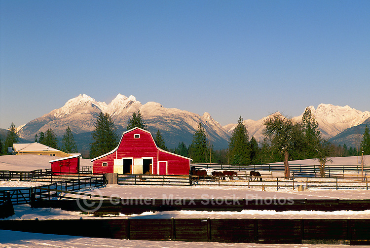 "Fraser Valley, Southwestern BC, British Columbia, Canada - Red Barn on Farm, Snow Capped ""Golden Ears"" Mountains (Coast Mountains) in Golden Ears Provincial Park, Winter"
