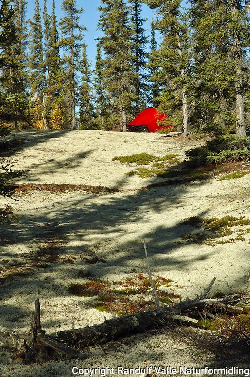 Rødt telt på mosebunn i skog ---- Red tent in forest