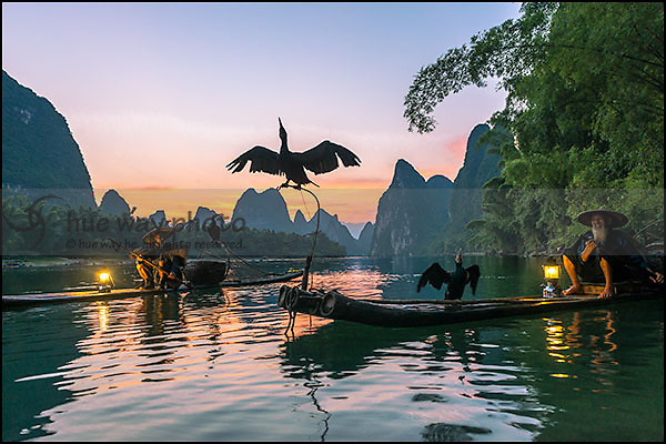 The famous Lijiang fishermen and their cormorants in early morning light. Lijiang, China